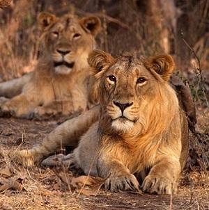 Safari-in-India-9472