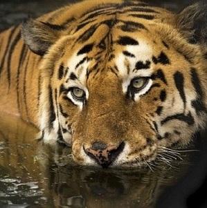 Safari-in-India-1