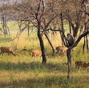 Safari-in-India-3