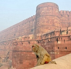 forti-e-palazzi-del-india-11
