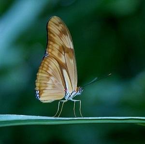 Natura-e-fauna-selvatica-in-India-1