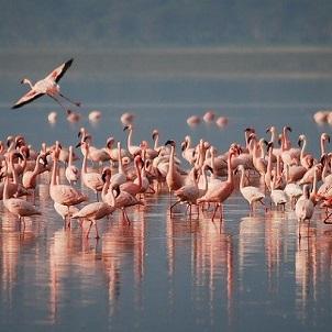 Natura-e-fauna-selvatica-in-India-3