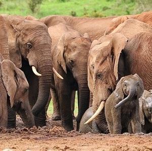 Natura-e-fauna-selvatica-in-India-4