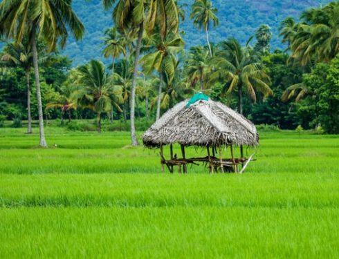 Agenzia-di-viaggi-a-Kerala, Agenzia-viaggi-a-Kerala, Bella-India-Tours-47